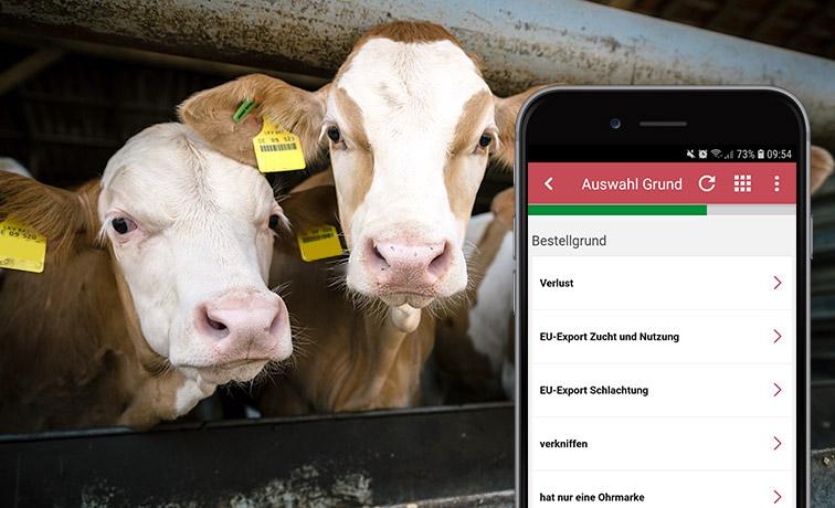 kühe Rinder smartphone ohrmake nachprägen