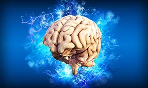 Abbildung vom Gehirn