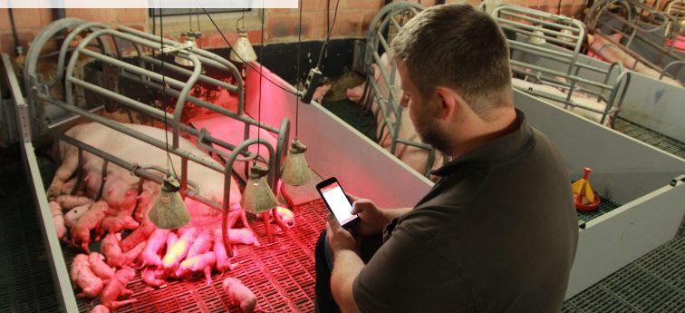 top farmplan und Pigexpert Sauenplaner, das Dreamteam