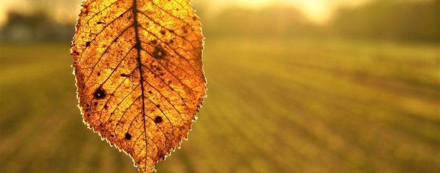 Herbstdüngung